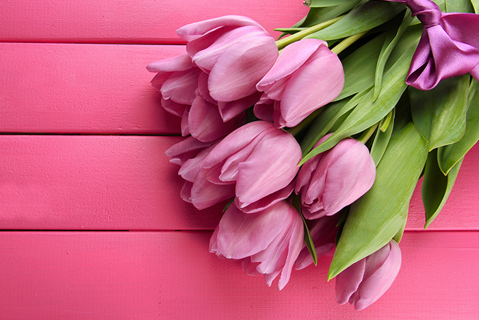 Pink tulips, flowers