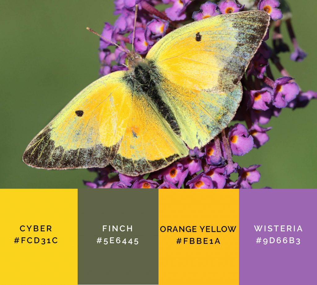 Butterfly palette has shades of yellow color