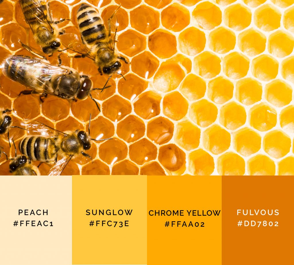 Honeycomb palette has shades of yellow color