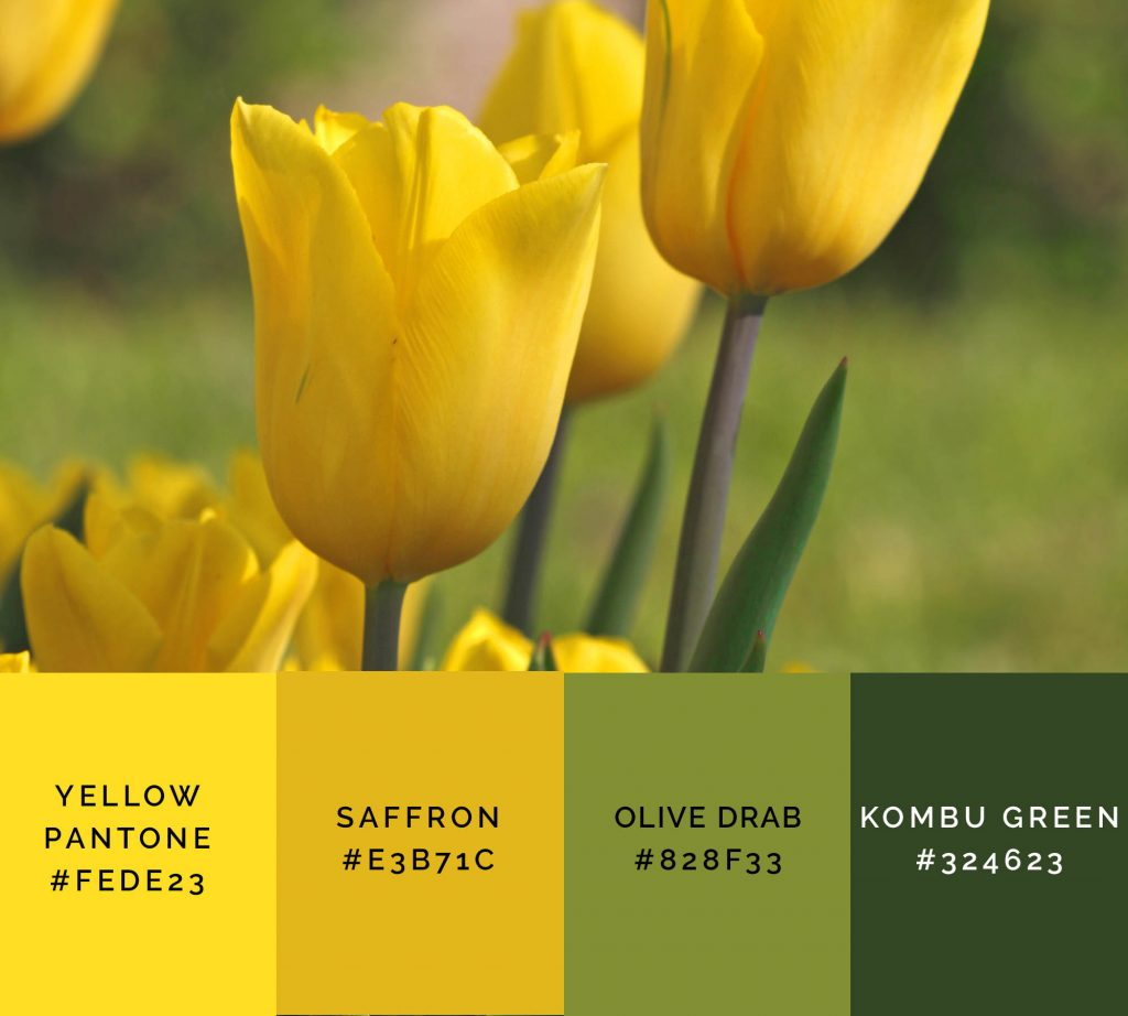 Tulips palette has shades of yellow color