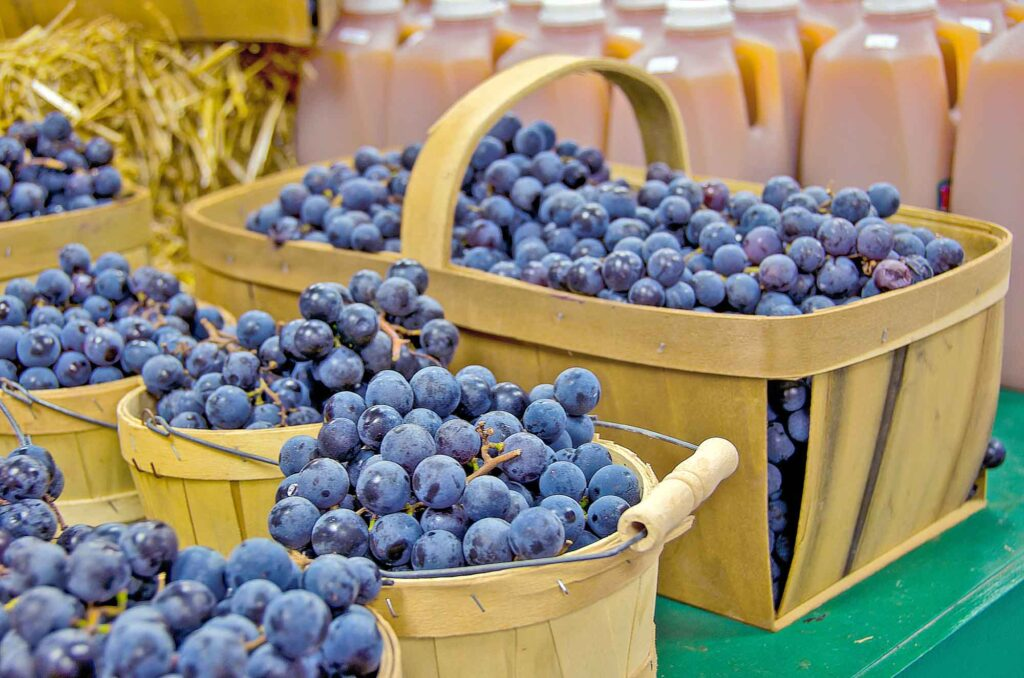 Blue concord grapes