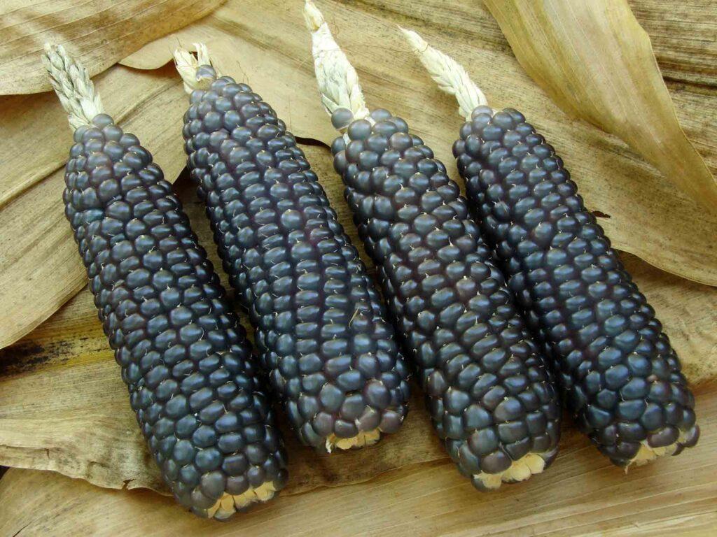 Blue corns