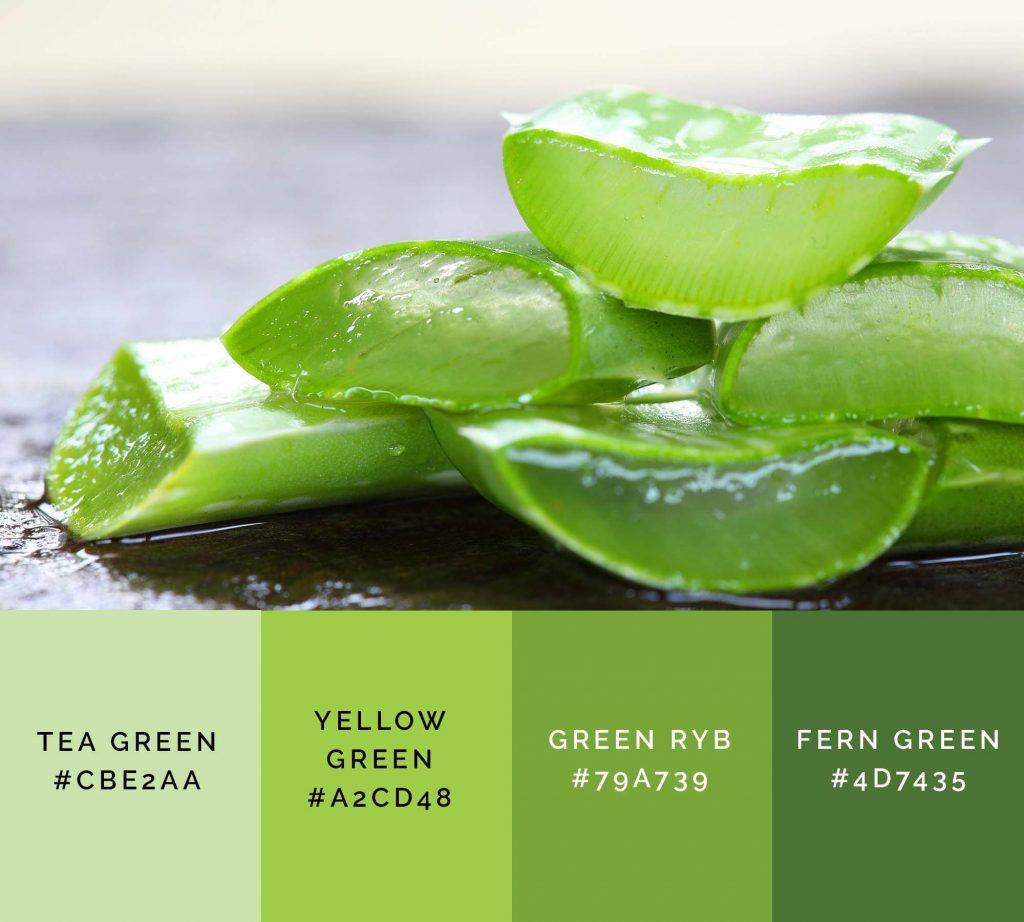 Aloe vera palette has beautiful shades of green color