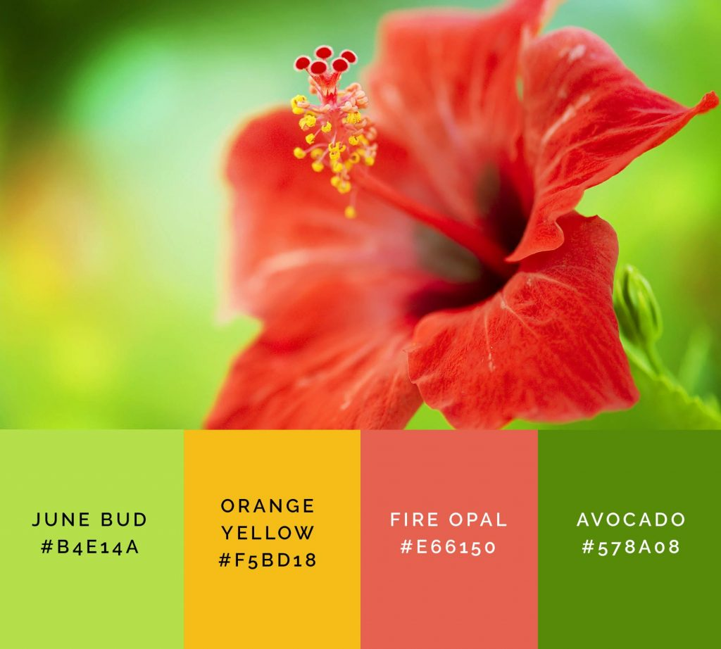 Hibiscus palette has beautiful shades of green color