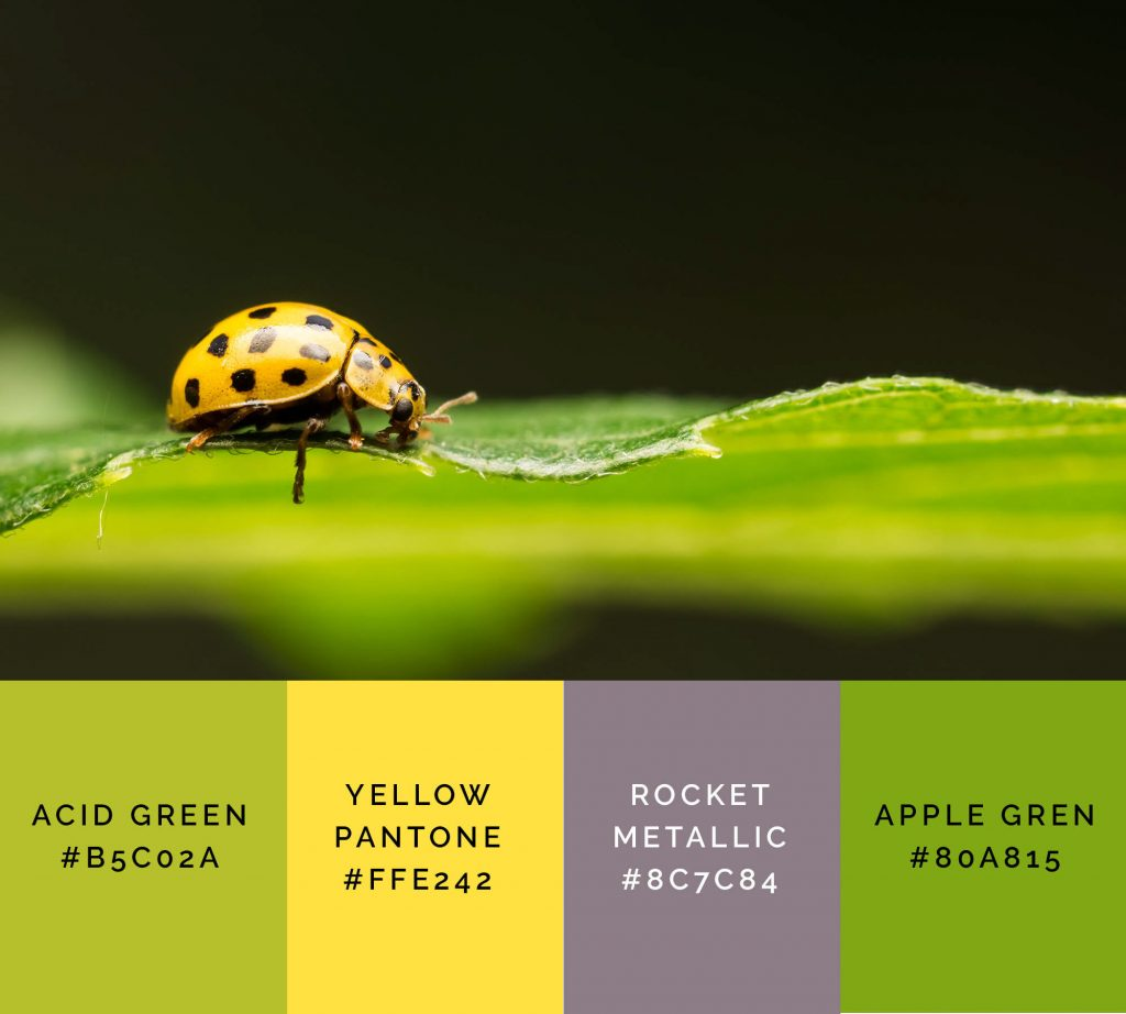 Ladybug palette has beautiful shades of green color