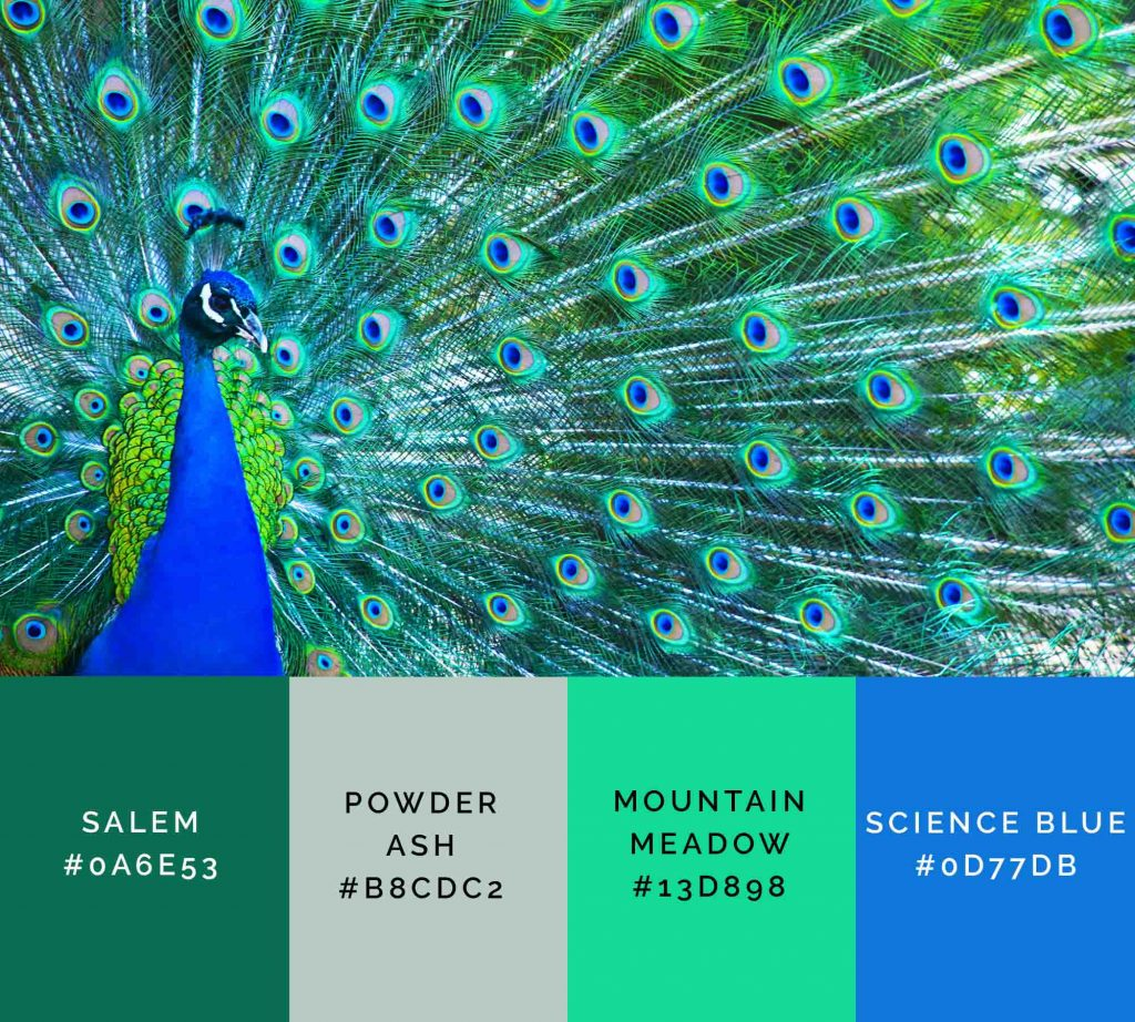 Peacock palette has beautiful shades of green color