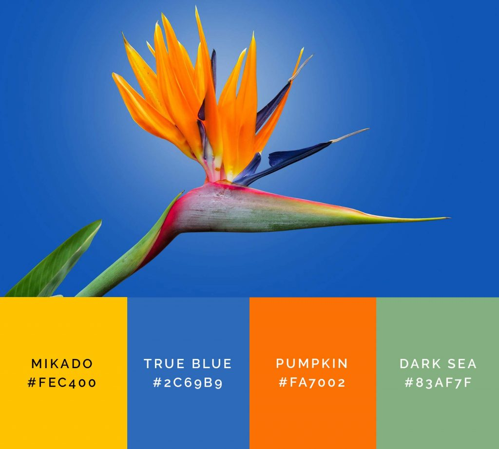 Bird flower palette has beautiful shades of orange color