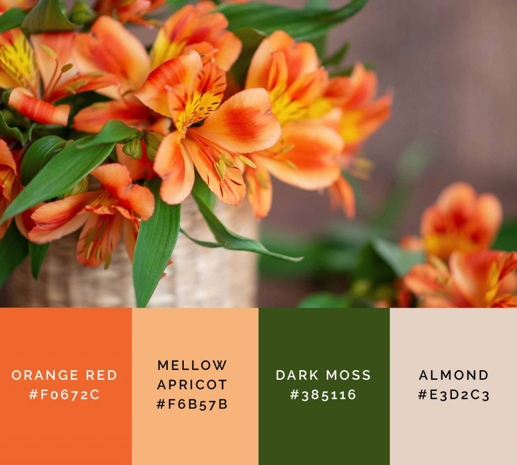 Flowers palette has beautiful shades of orange color