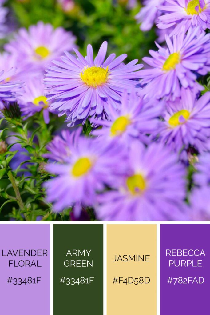 Aster palette has beautiful shades of purple color