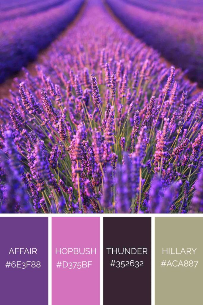 Lavender field palette has beautiful shades of purple color
