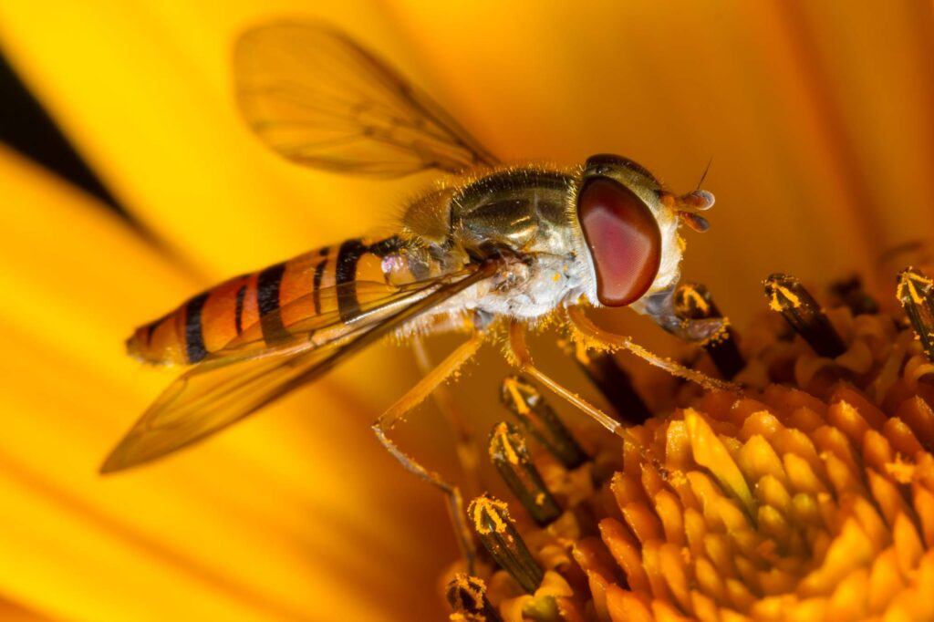 Yellow hoverfly on flower