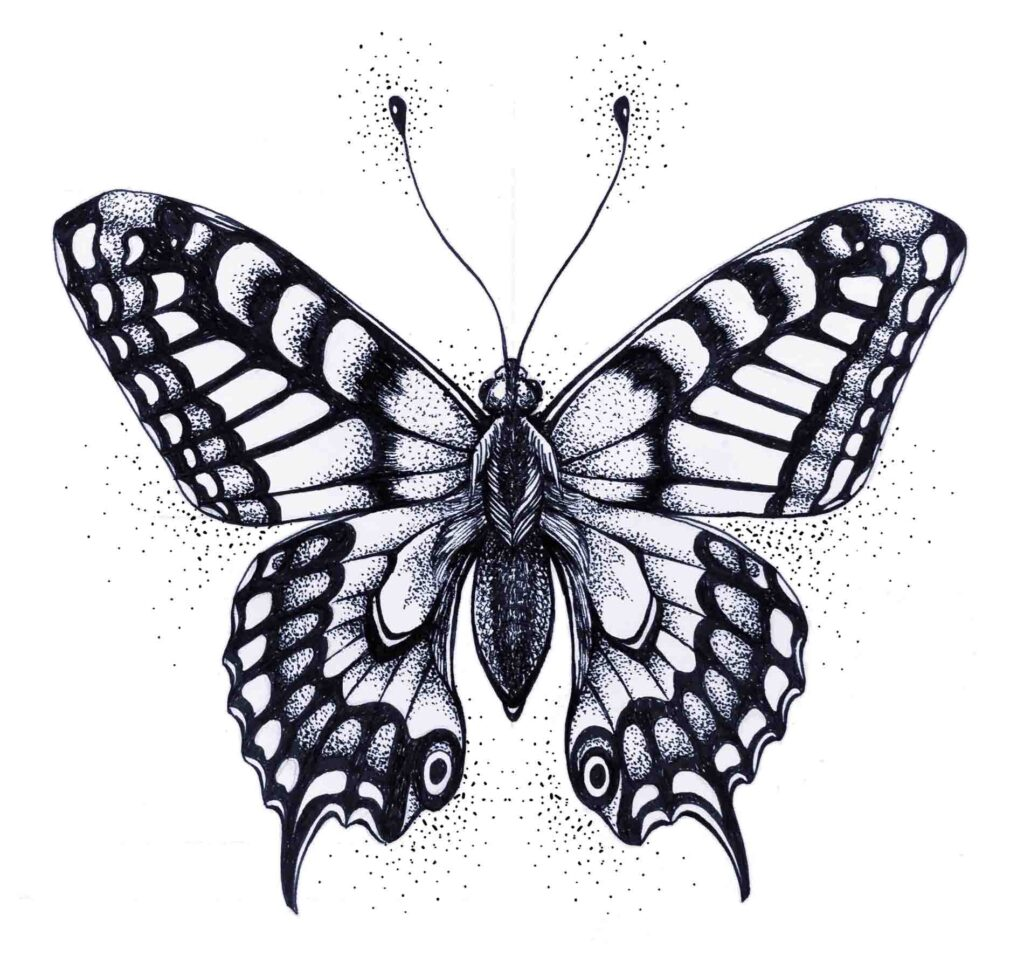 Silhouette of black and white butterfly