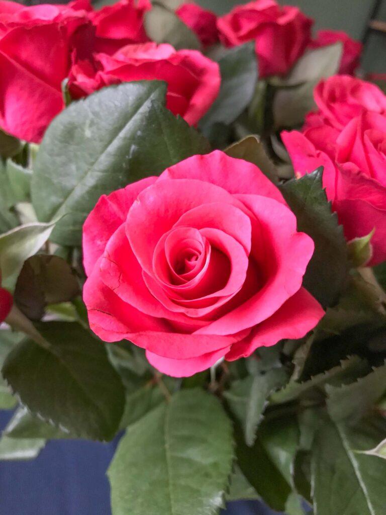 Dark pink rose color meaning