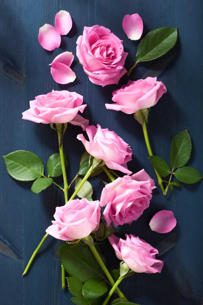 Pink rose color meaning
