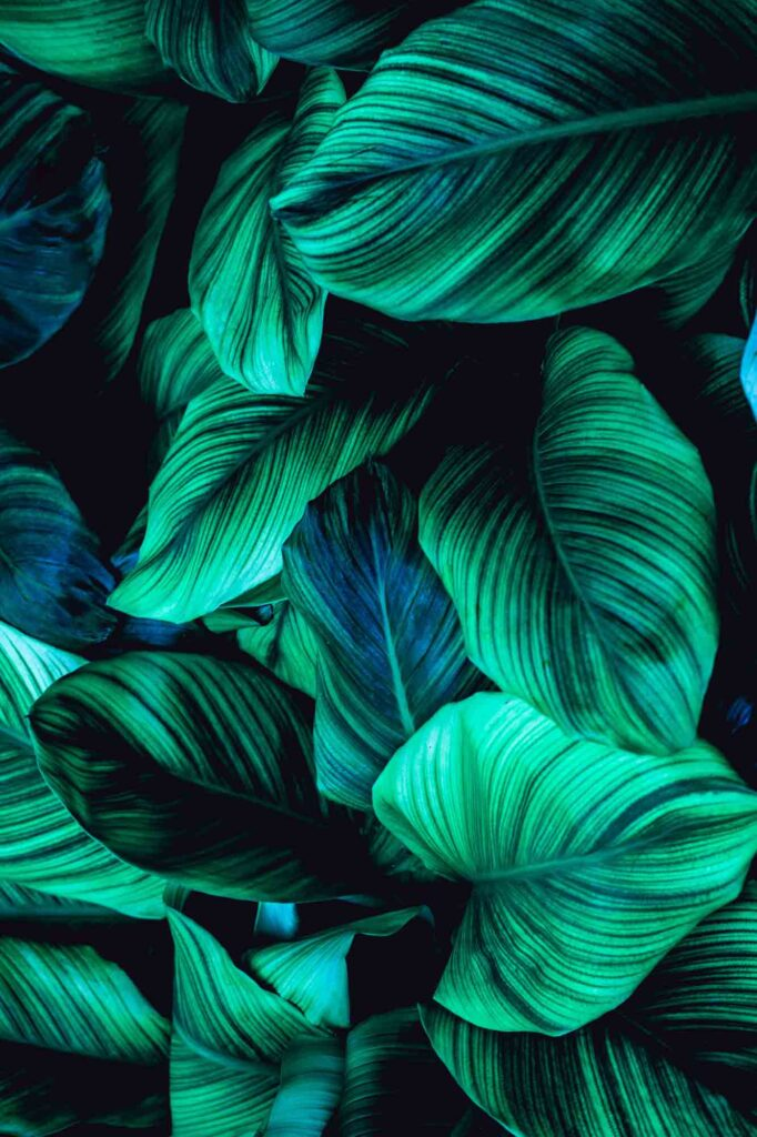 Blue and green tropical leaves, great example of analogous colors
