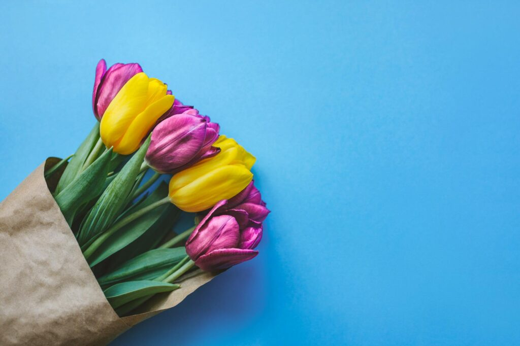 Magenta and yellow tulips with green leaves on blue background is an example of tetradic colors